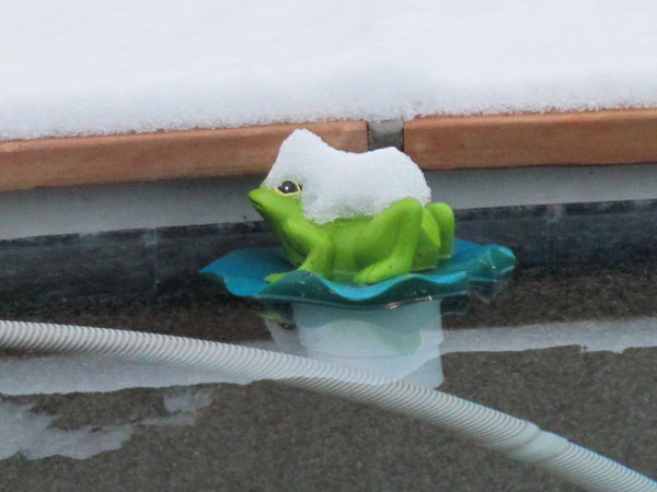 Chlorinator pool frog with a hat of snow